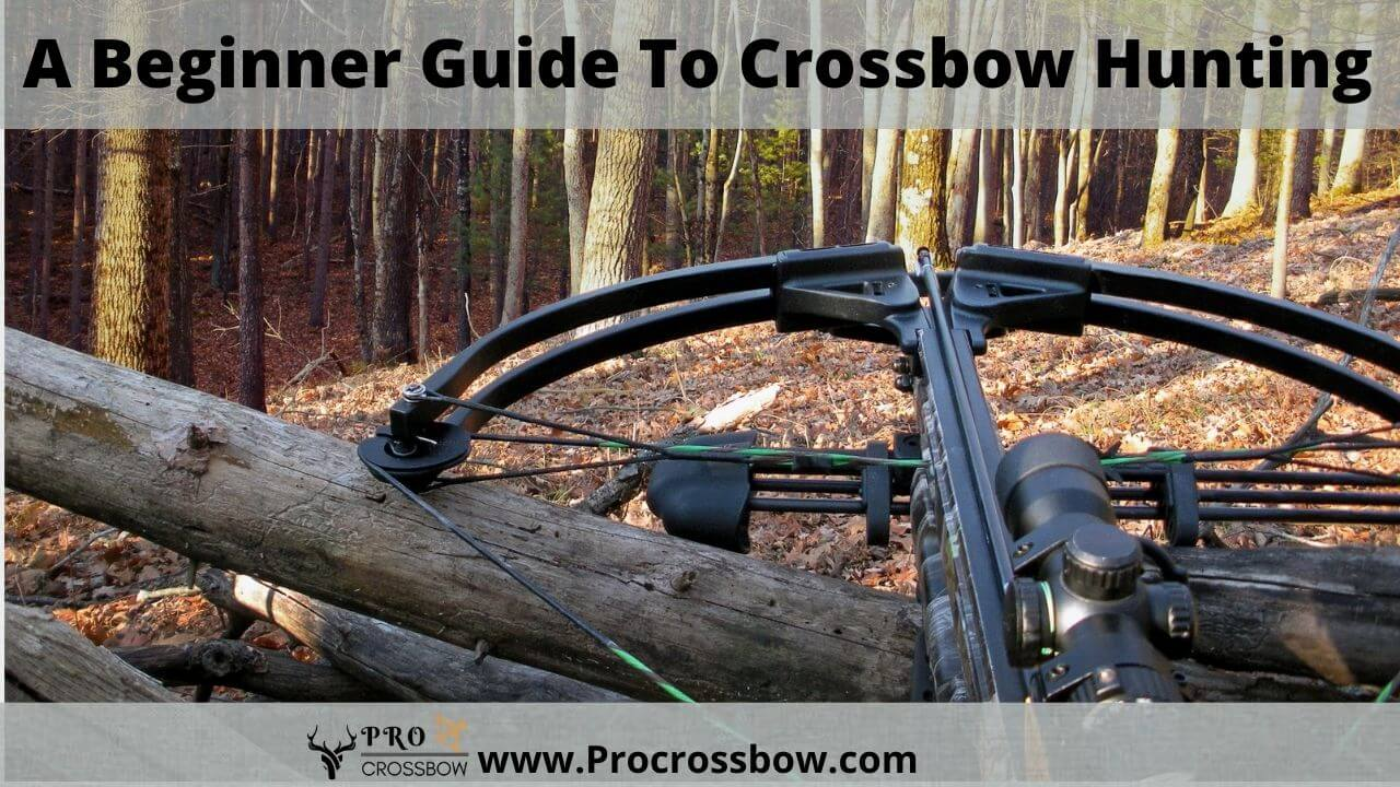 A Beginner Guide To Crossbow Hunting