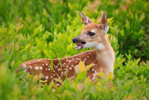 The Noise Deer Make